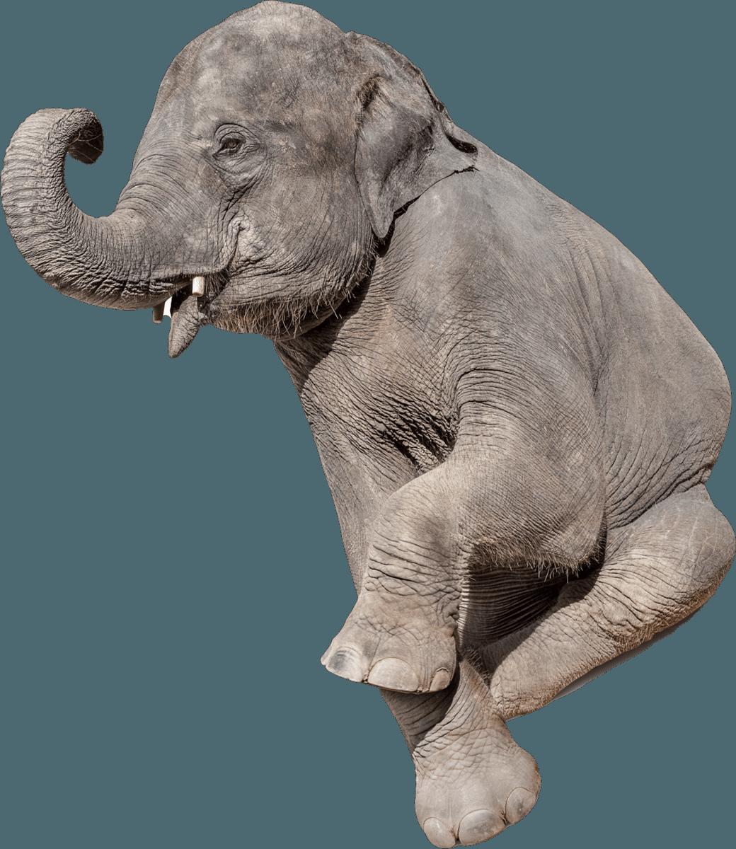 elefante11x.png